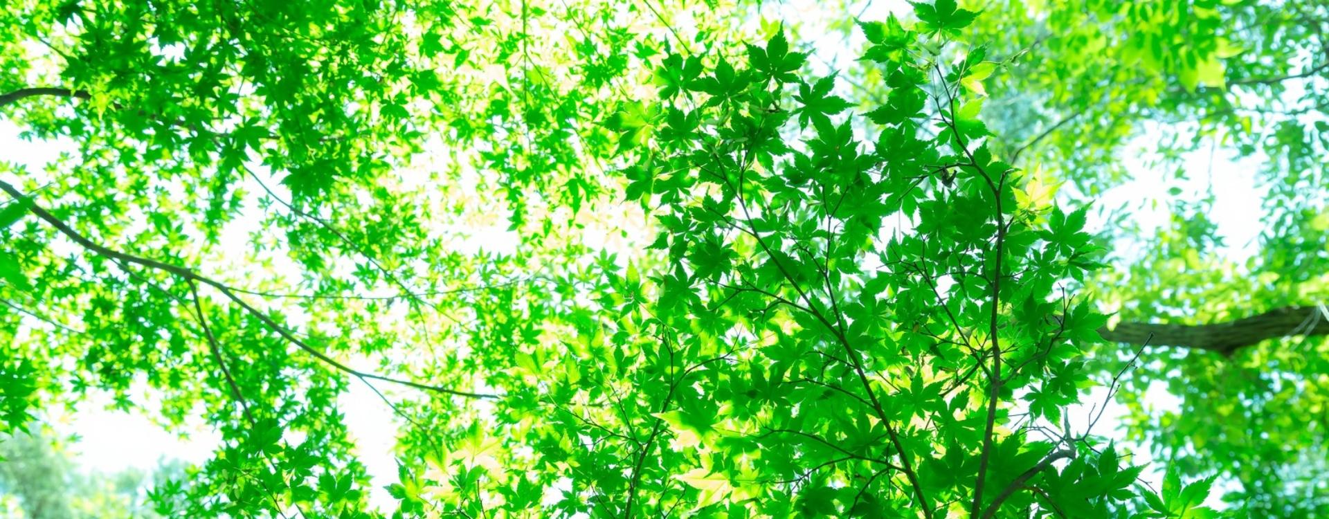はむら鍼灸院|東京・立川|腰痛 坐骨神経痛 スポーツ障害